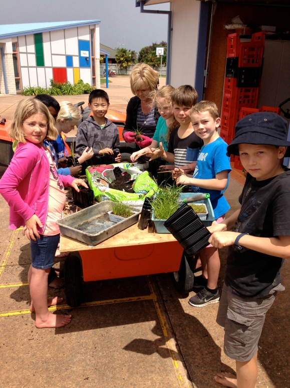 Pricking out our seedlings in 2014