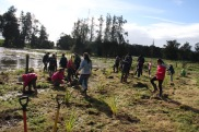 Planting the wetland