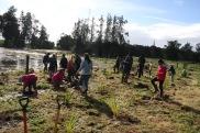 Planting the wetland