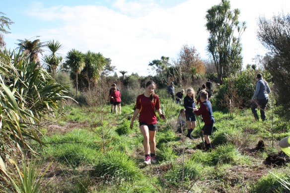 Sudents planting on the edge of Lake Ngaroto. The restoration of peat lake health is one of many such programmes in the district.