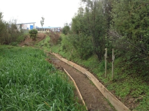 Gully path with Reed Sweet Grass (Glyceria maxima)