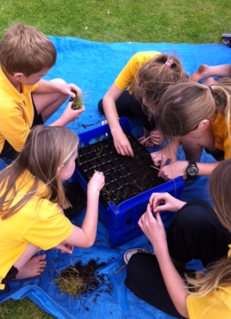 Pricking out the seedlings in 2015
